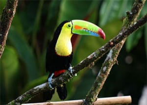 costa-rica-national-parks